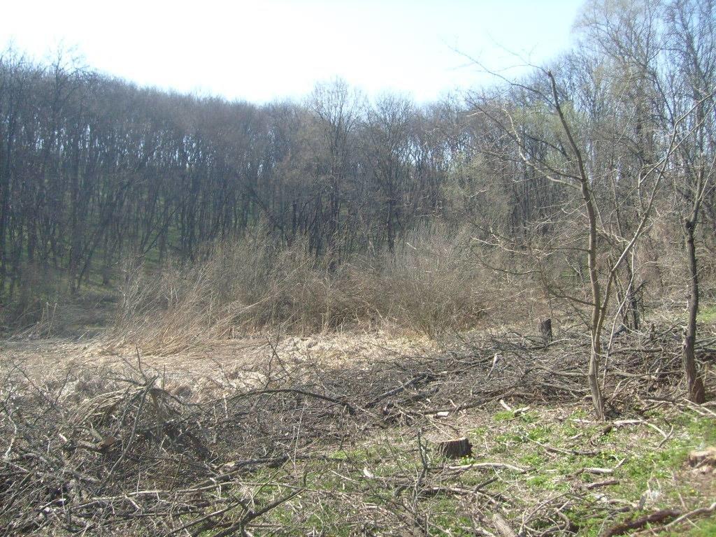 «Варварски вырублены деревья»: каменские экологи бьют тревогу, фото-2