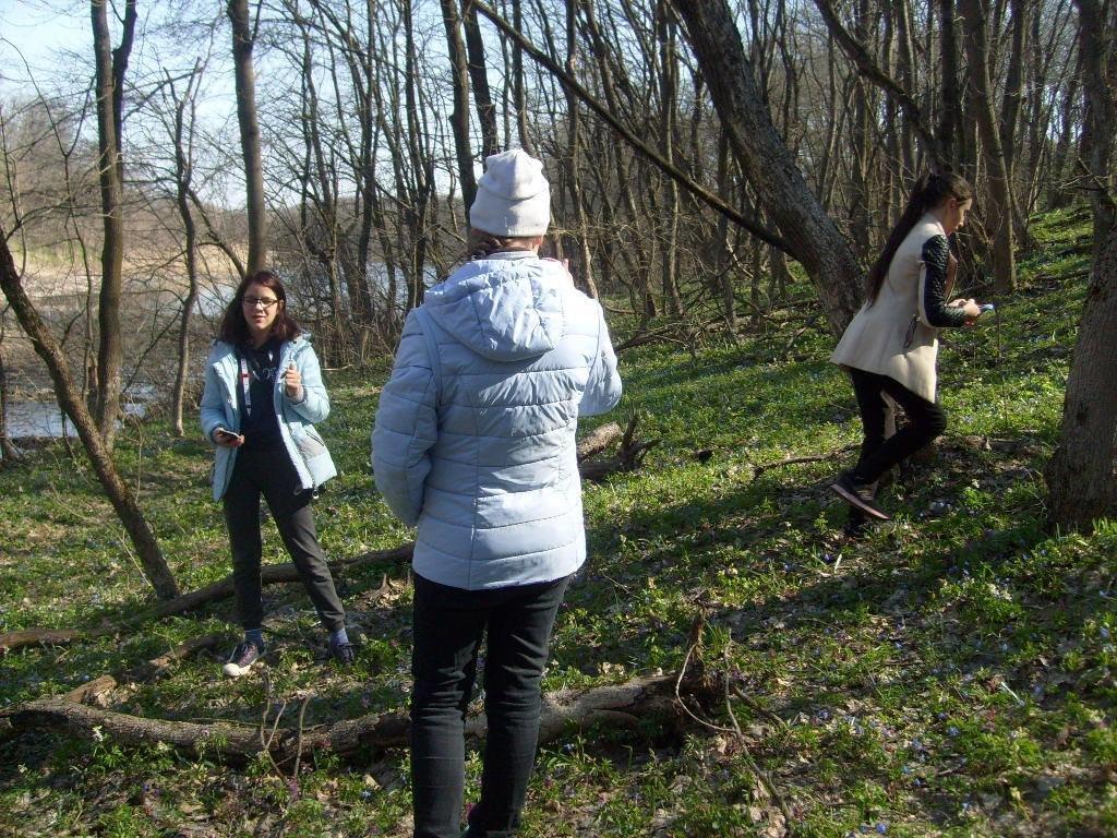 «Варварски вырублены деревья»: каменские экологи бьют тревогу, фото-12