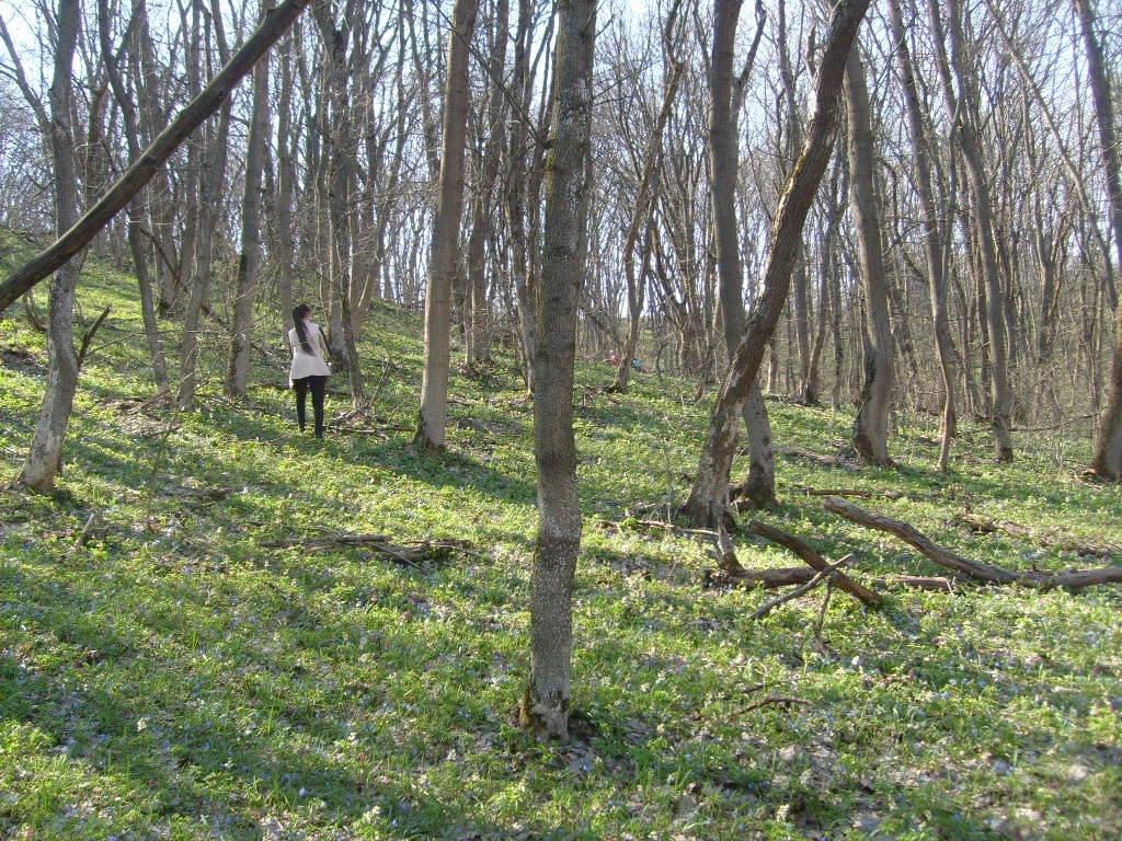 «Варварски вырублены деревья»: каменские экологи бьют тревогу, фото-11