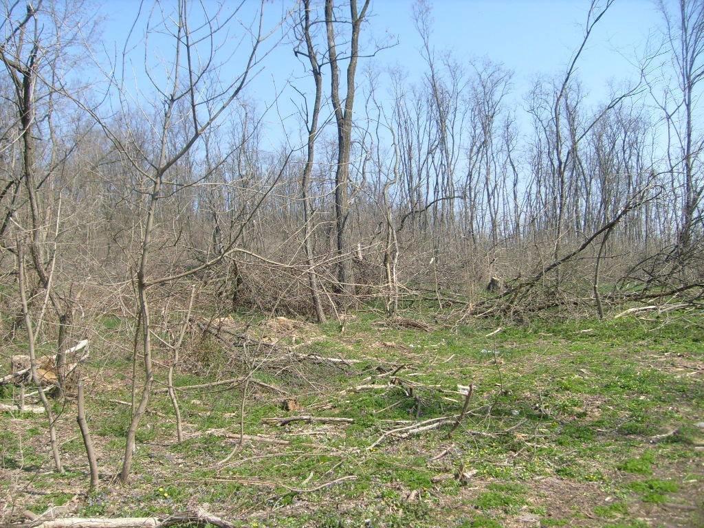 «Варварски вырублены деревья»: каменские экологи бьют тревогу, фото-3