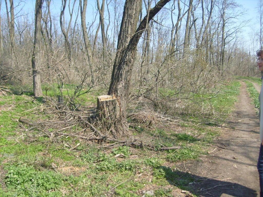 «Варварски вырублены деревья»: каменские экологи бьют тревогу, фото-4