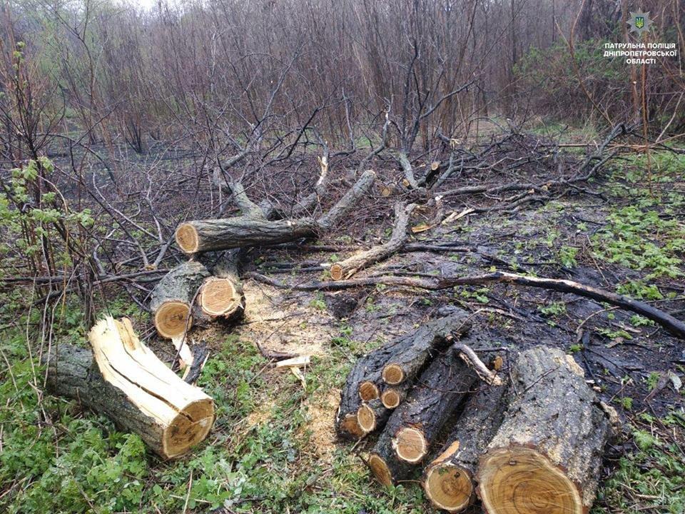Полицейские пресекли незаконную вырубку леса в Каменском, фото-1
