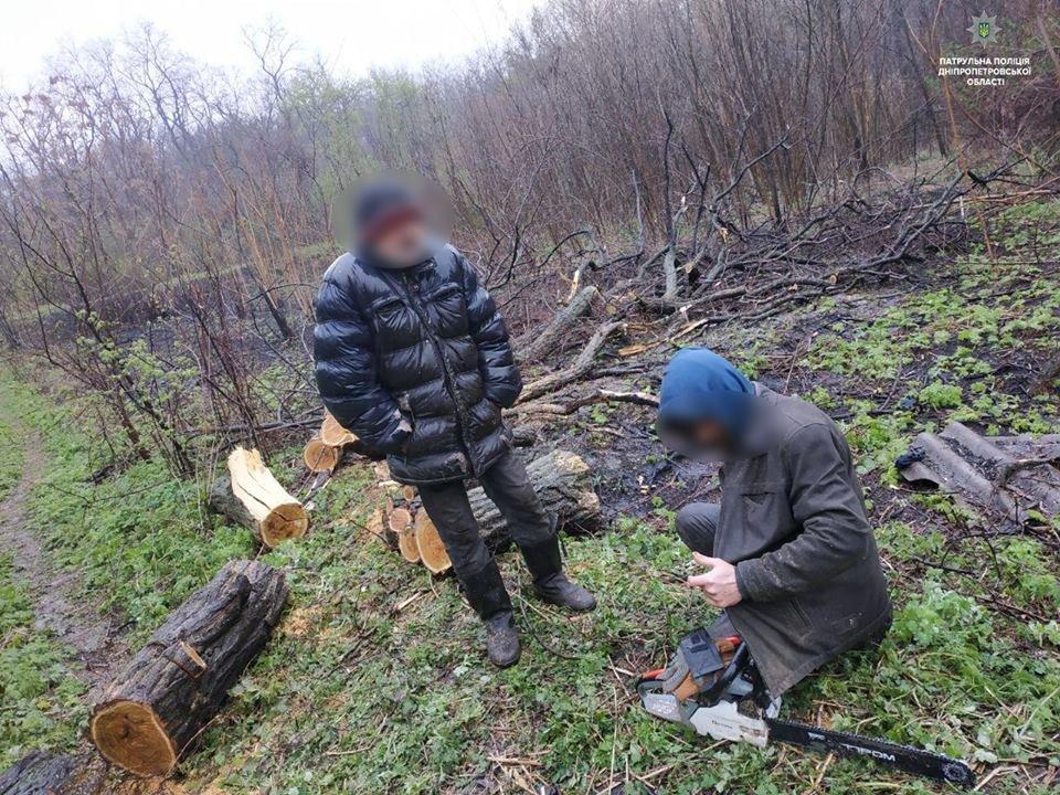 Полицейские пресекли незаконную вырубку леса в Каменском, фото-4