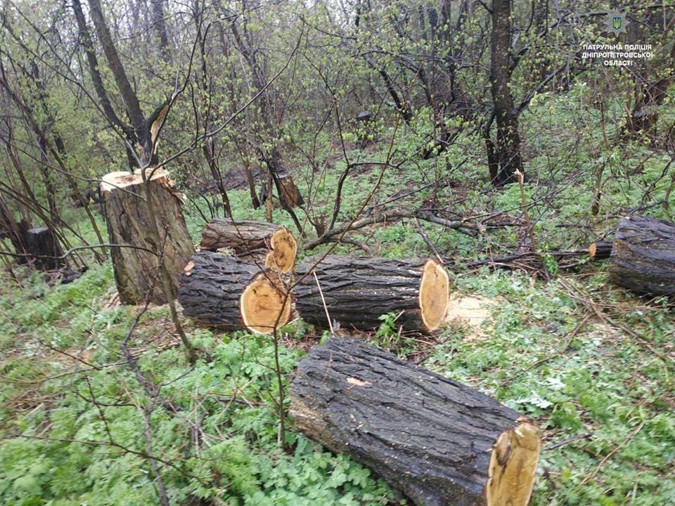 Полицейские пресекли незаконную вырубку леса в Каменском, фото-2