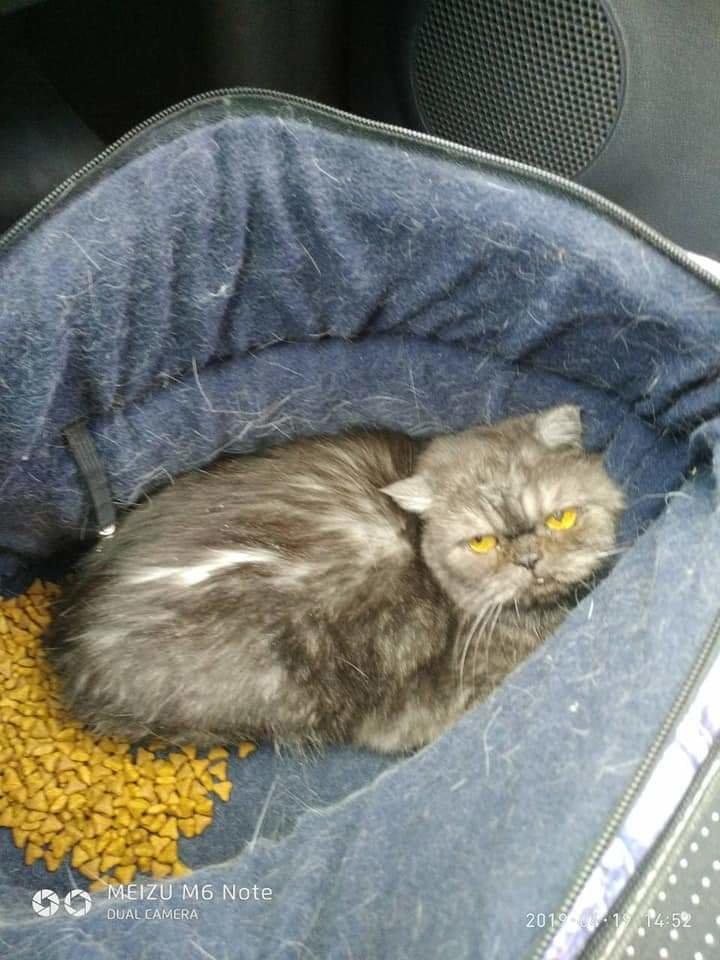 Ждала, когда за ней вернутся: в Днепре домашнюю кошку засунули в сумку и выбросили в лес, фото-1