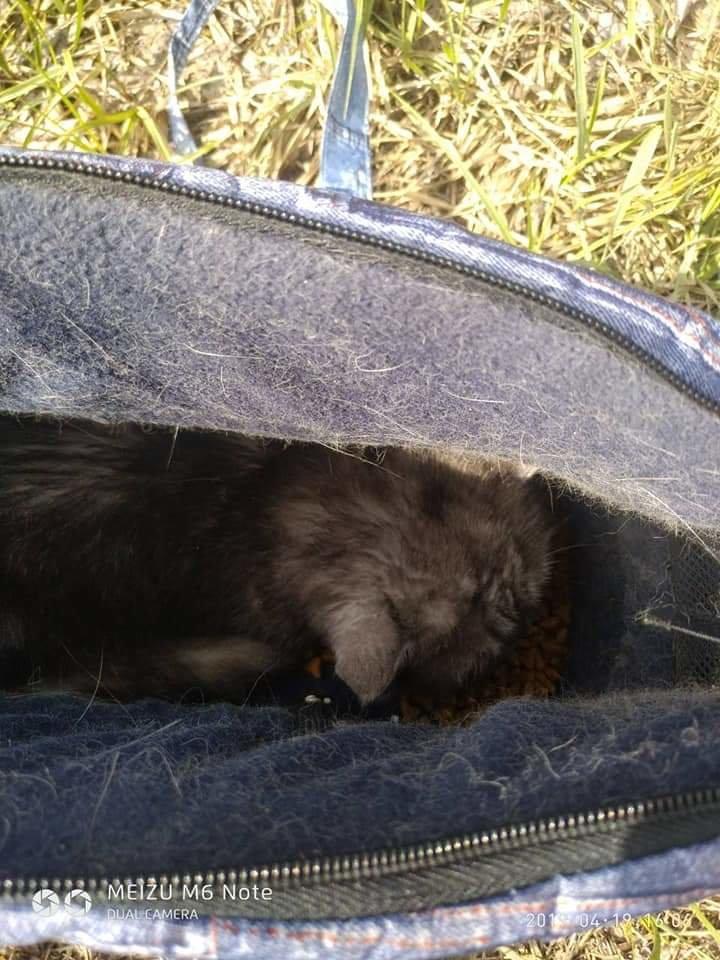 Ждала, когда за ней вернутся: в Днепре домашнюю кошку засунули в сумку и выбросили в лес, фото-3