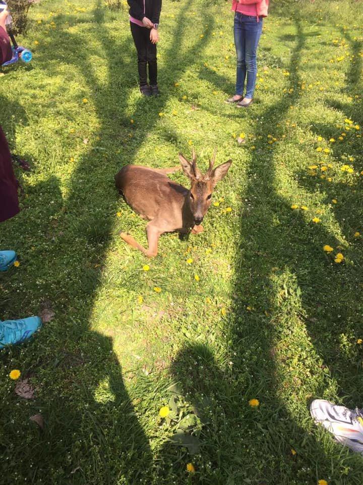В Каменском на Соцгороде нашли малыша косули: животному нужна помощь , фото-1