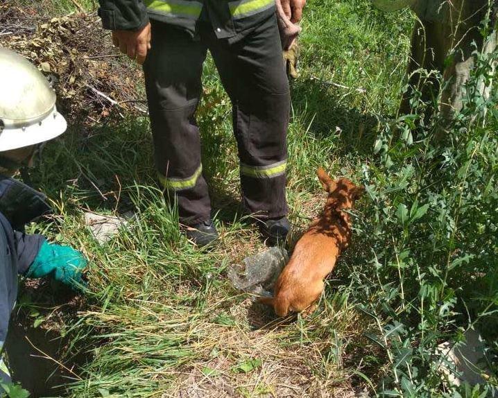 Под Каменским спасали щенка, фото-1