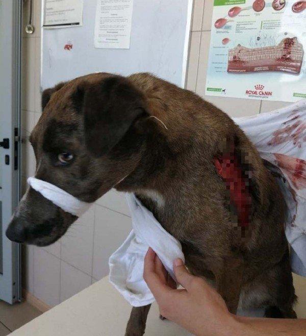 В Днепре бездомные сняли кожу с собаки, чтобы съесть и вылечиться от туберкулеза, фото-2