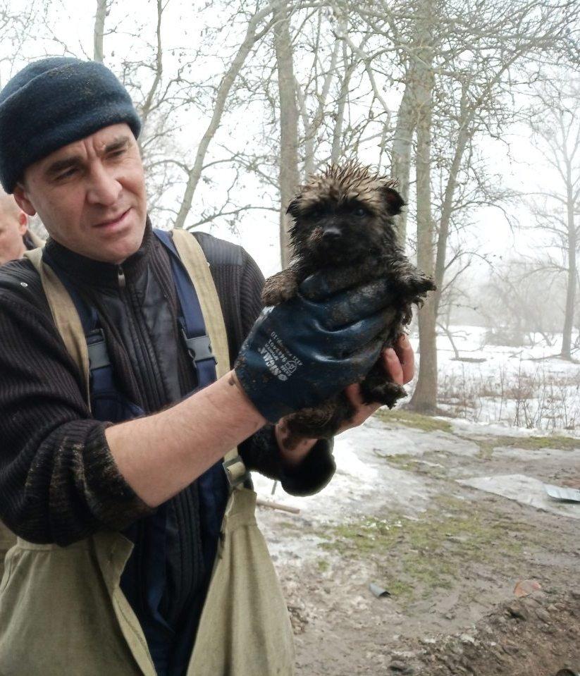 Как спасатели Каменского помогают животным, фото-11