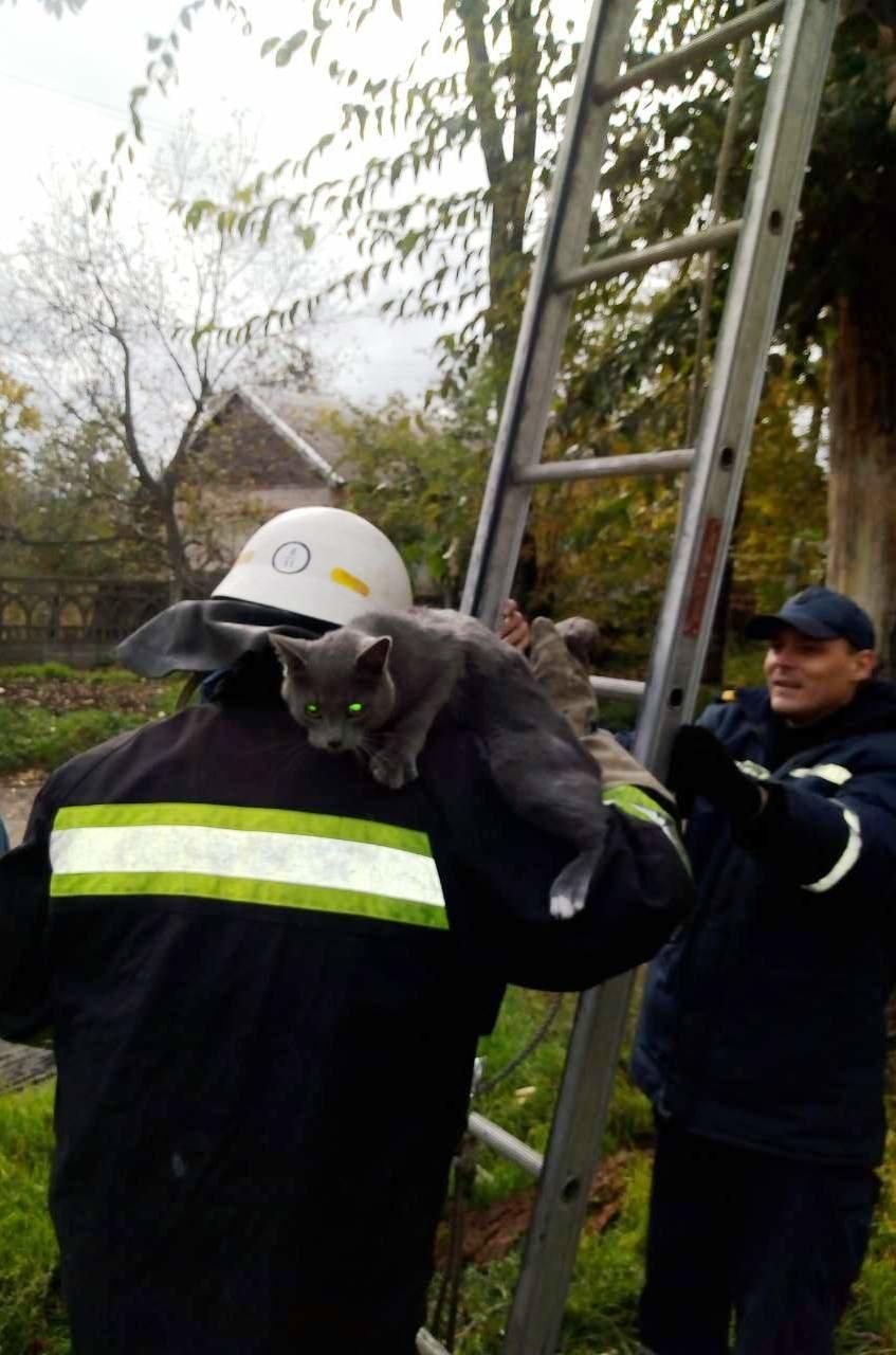 Как спасатели Каменского помогают животным, фото-12