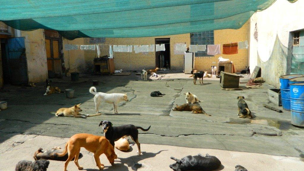 Как спасатели Каменского помогают животным, фото-3
