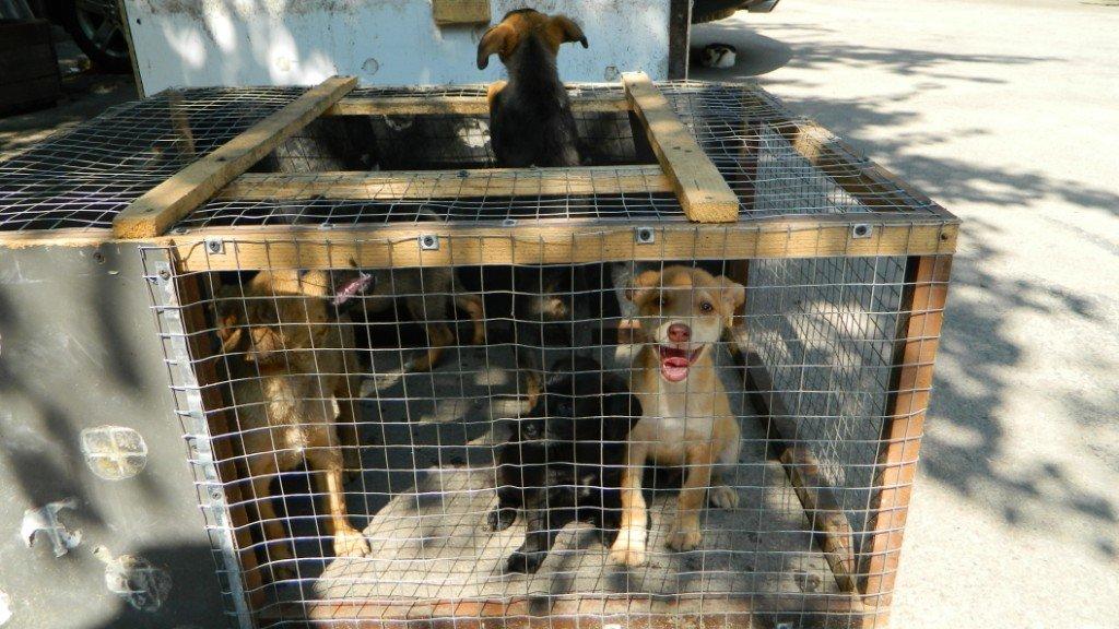 Как спасатели Каменского помогают животным, фото-4
