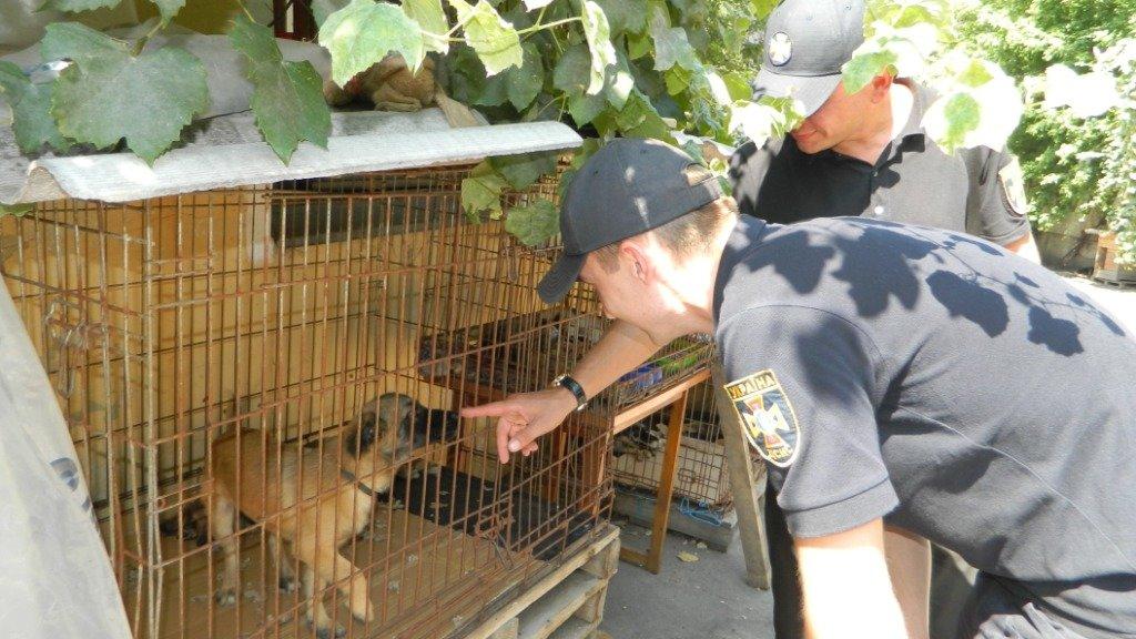 Как спасатели Каменского помогают животным, фото-5