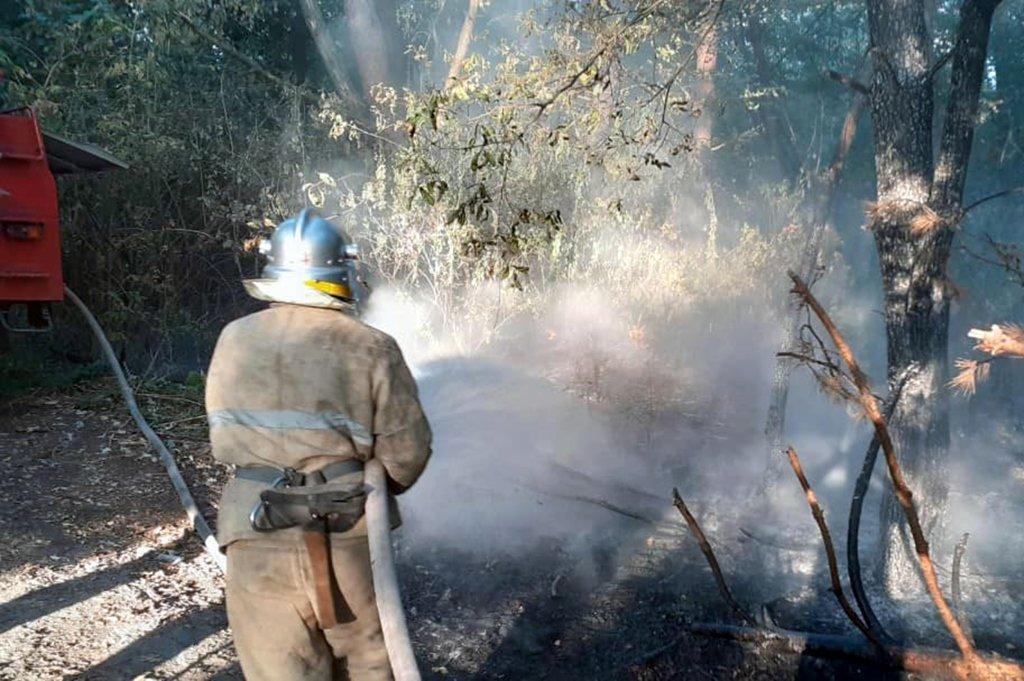 Горит экосистема: за сутки на Днепропетровщине произошло 48 пожаров, фото-1