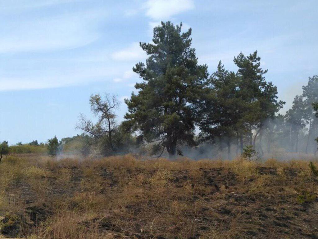 Под Каменским сгорело более 3 гектаров леса, фото-1