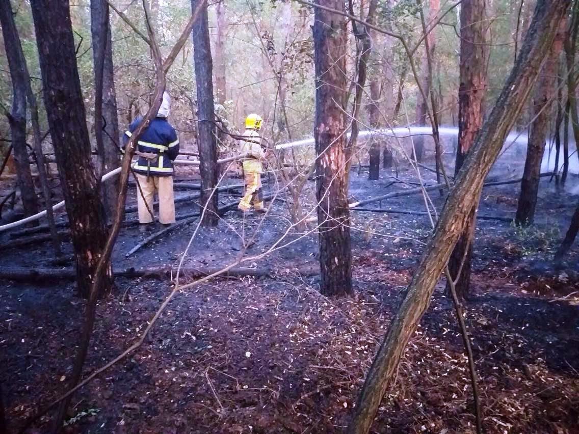 Неподалеку от Каменского горел сосновый лес, фото-1