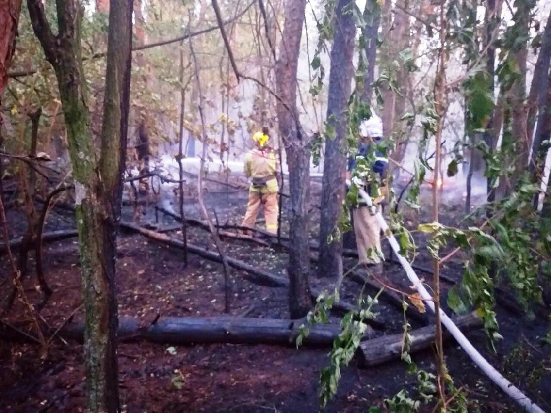 Неподалеку от Каменского горел сосновый лес, фото-2