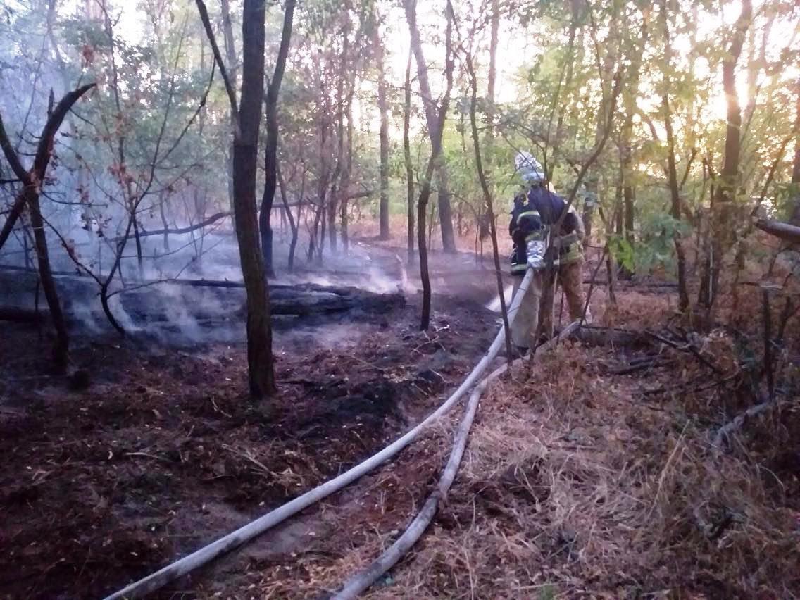 Неподалеку от Каменского горел сосновый лес, фото-3