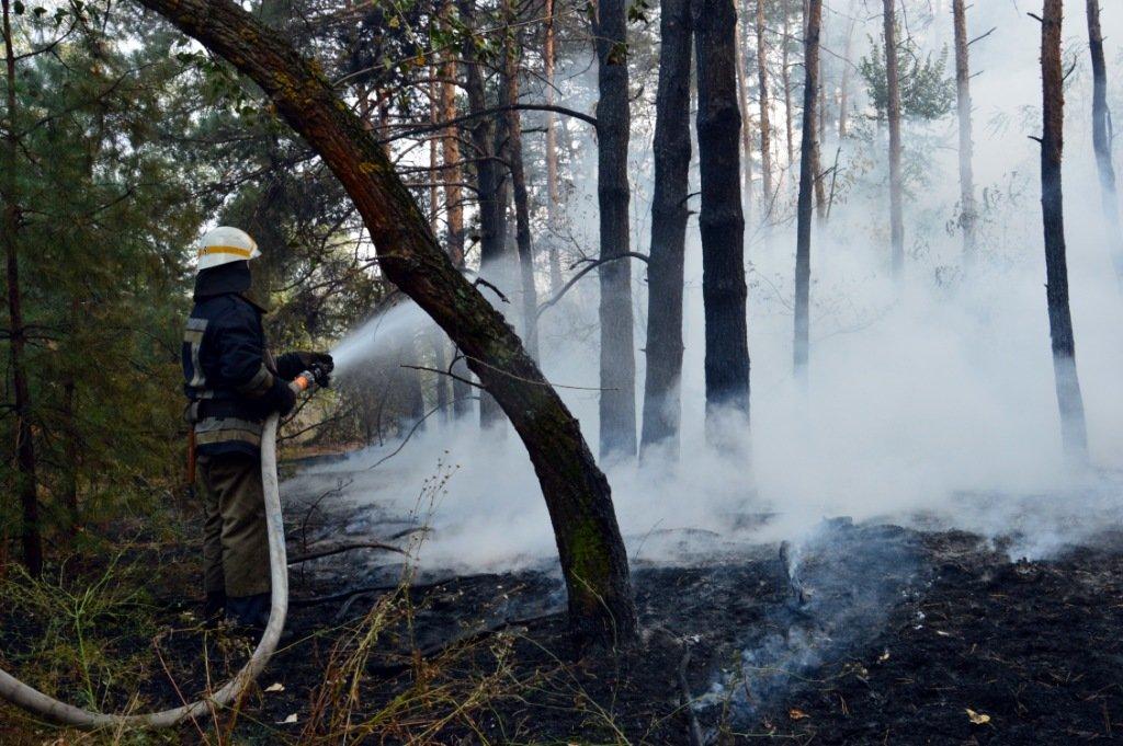 Под Каменским горел лес: выгорело 12 гектаров экосистемы, фото-12