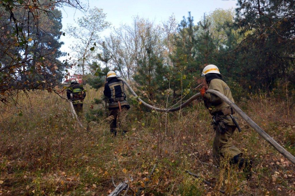 Под Каменским горел лес: выгорело 12 гектаров экосистемы, фото-13