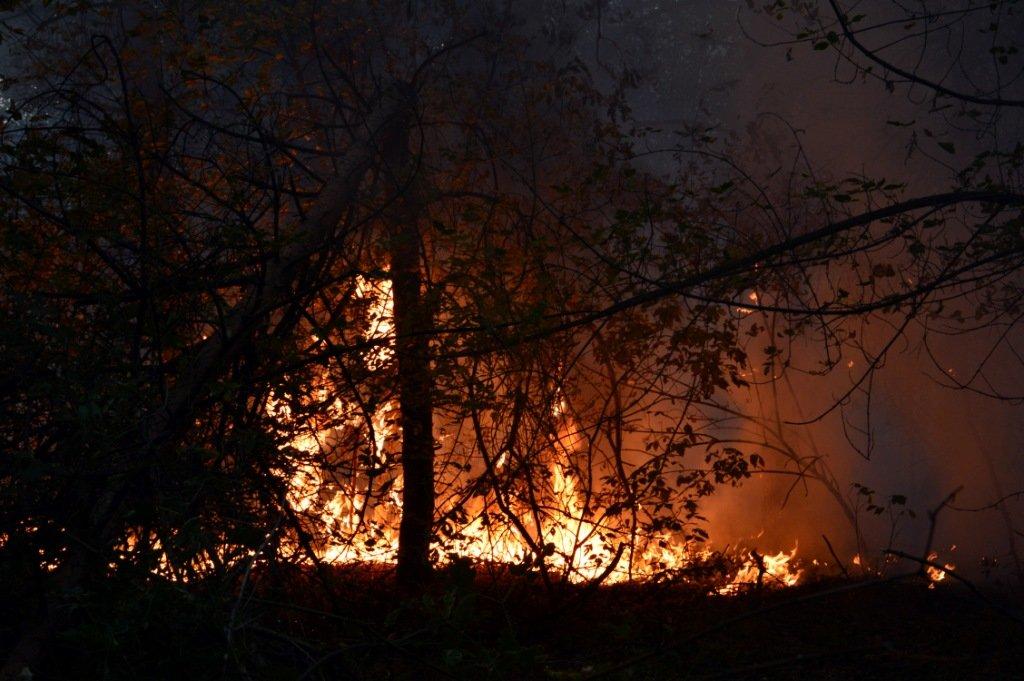 Под Каменским горел лес: выгорело 12 гектаров экосистемы, фото-7