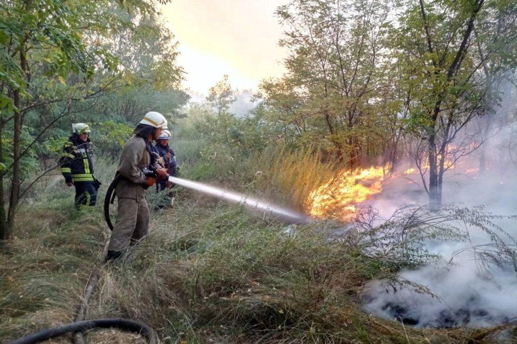 Под Каменским горел лес: выгорело 12 гектаров экосистемы, фото-5