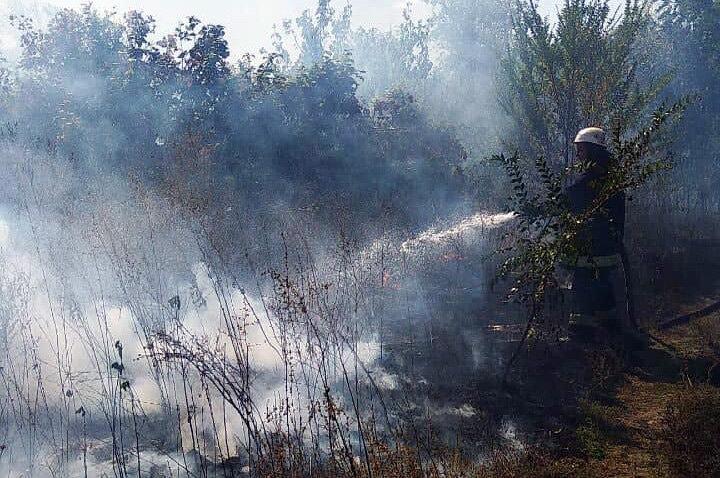 Под Каменским горел лес: выгорело 12 гектаров экосистемы, фото-4
