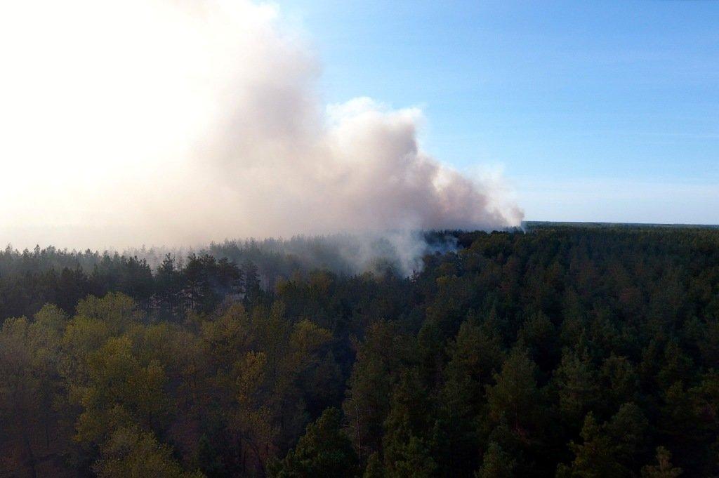 Под Каменским горел лес: выгорело 12 гектаров экосистемы, фото-8