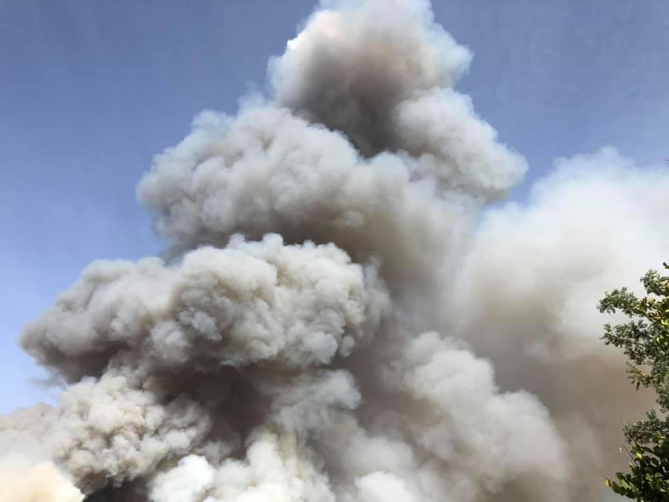 Под Каменским горел лес: выгорело 12 гектаров экосистемы, фото-3