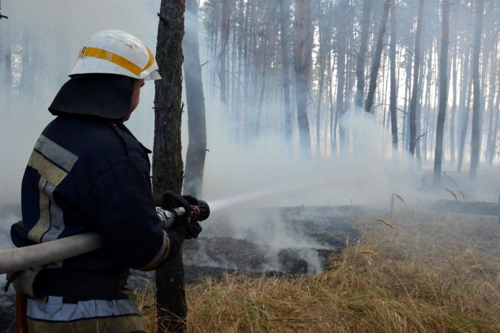 Под Каменским горел лес: выгорело 12 гектаров экосистемы, фото-9