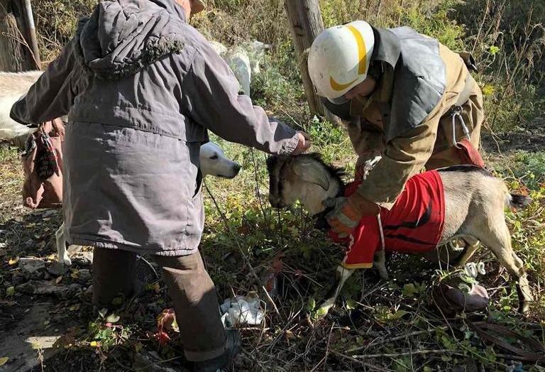 В Каменском коза провалилась в заброшенный погреб, фото-5
