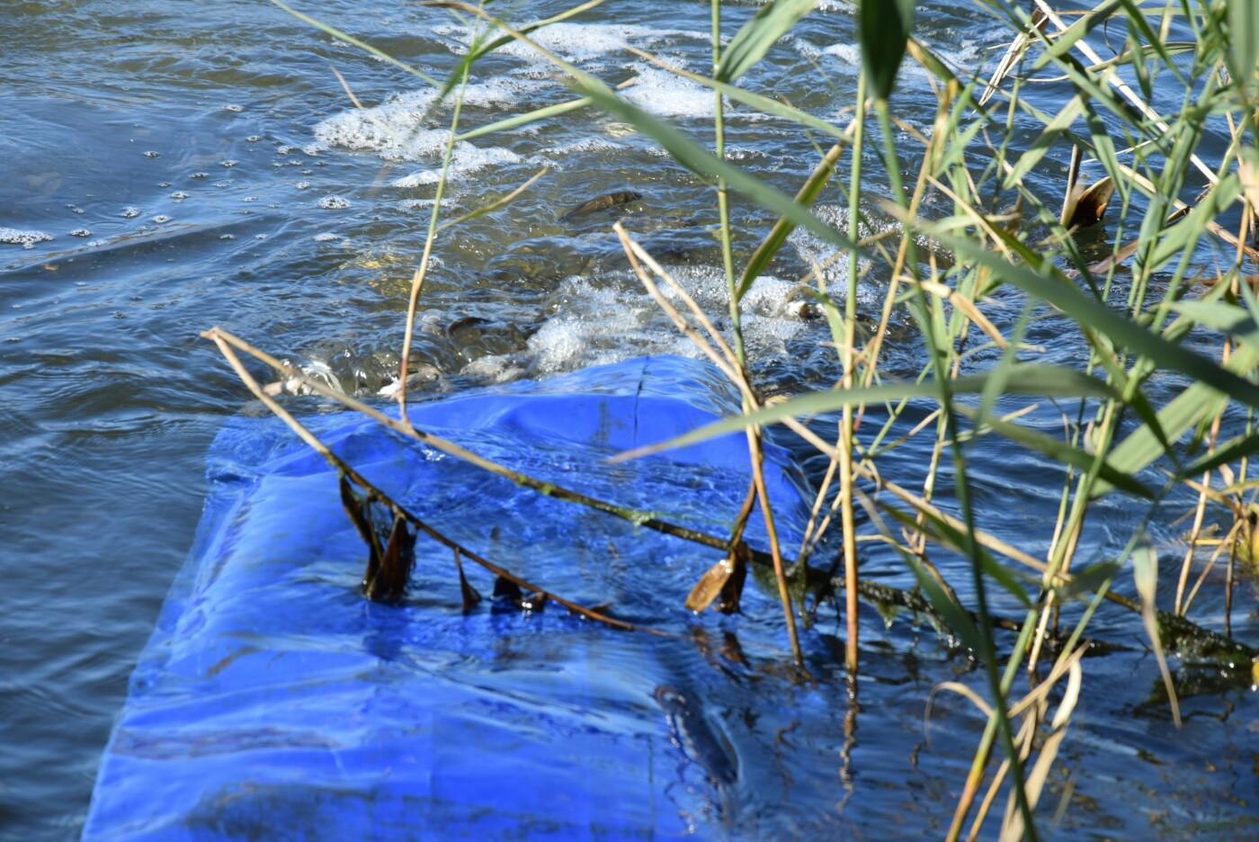 Зарыбление на левобережье Каменского: в дренажный канал выпустили мальков карпа и белого амура, фото-8