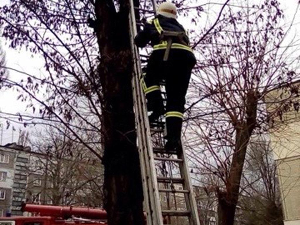 Каменские спасатели сняли с дерева котика, фото-1