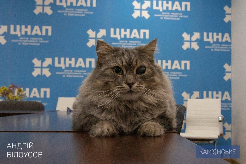 В ЦПАУ Каменского презентовали новогодний пакет новых сервисов, фото-1