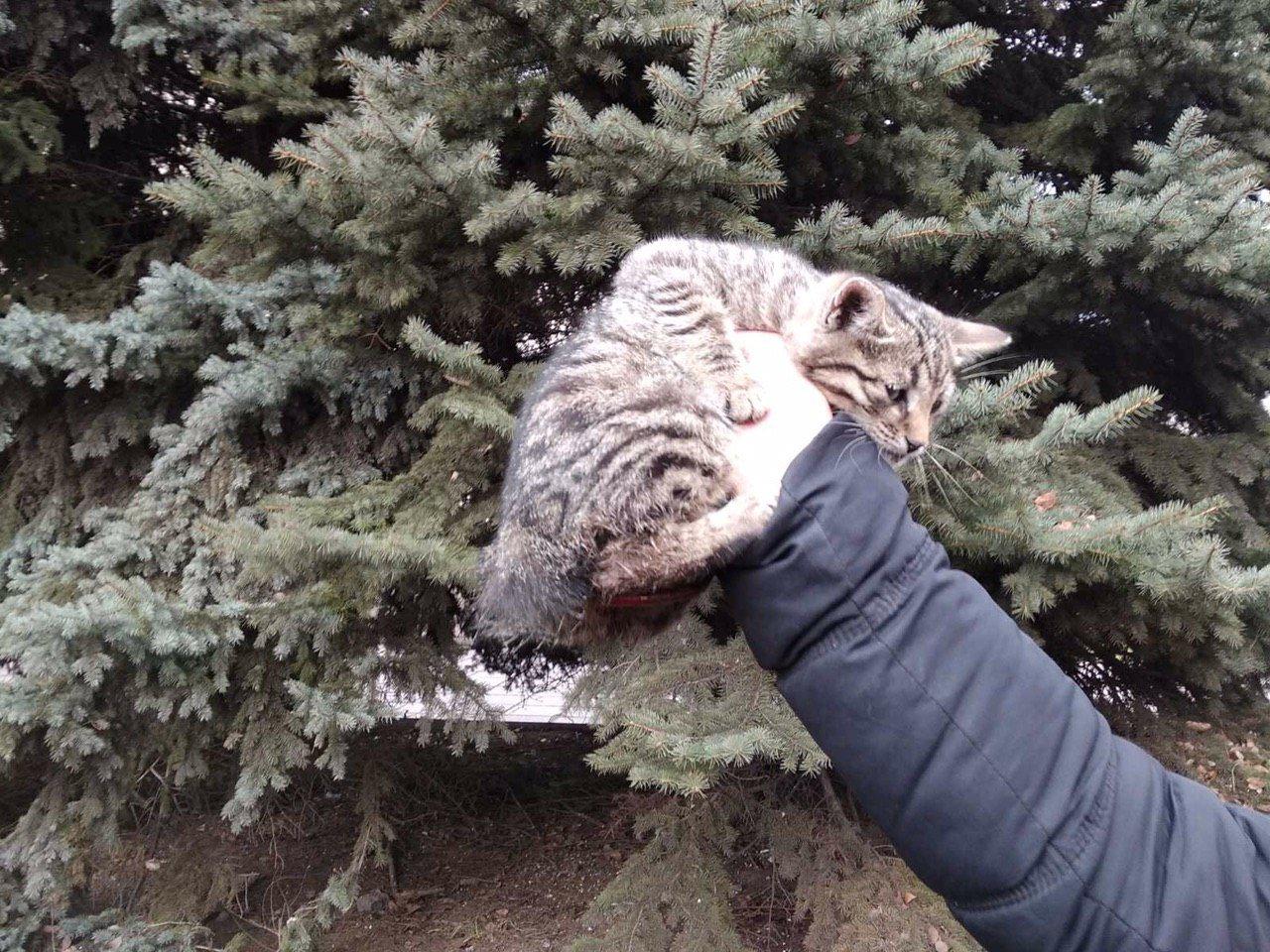 В Каменском на Свободы пожарные спасли кота, фото-1