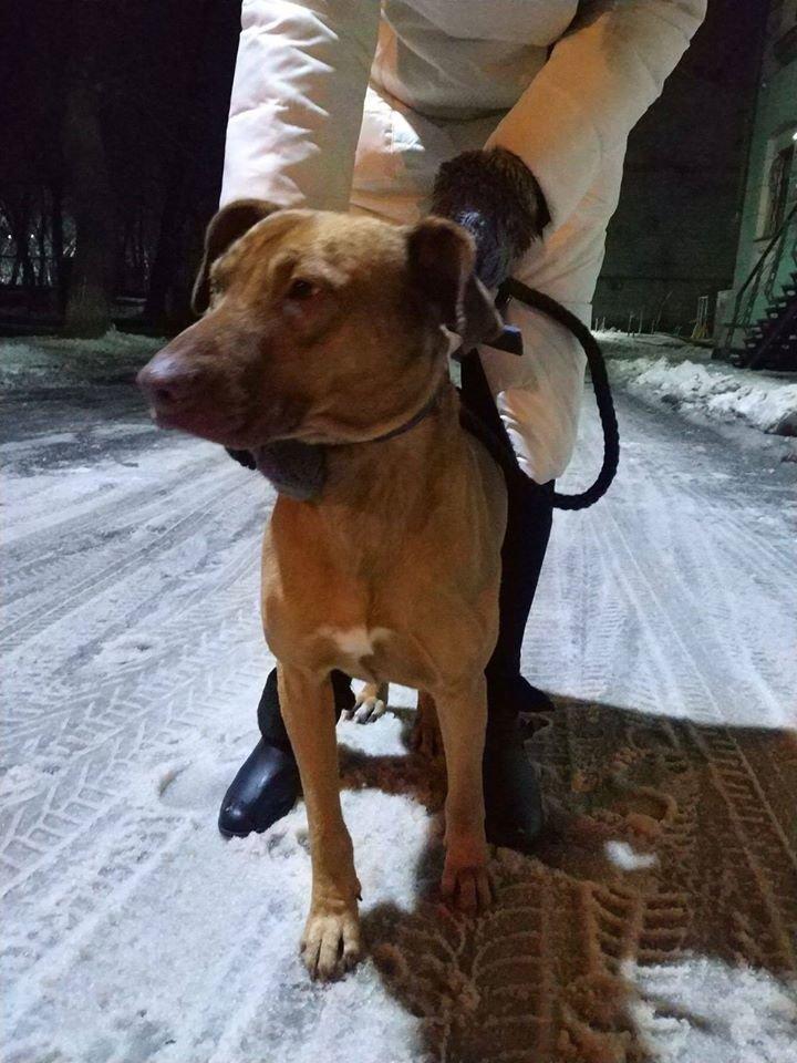 На коротком поводке и морозе: в парке Каменского бросили собаку, фото-1