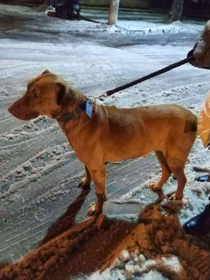 На коротком поводке и морозе: в парке Каменского бросили собаку, фото-3