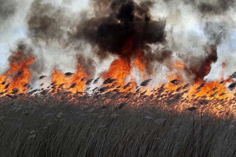 В Каменском горит экосистема, фото-8