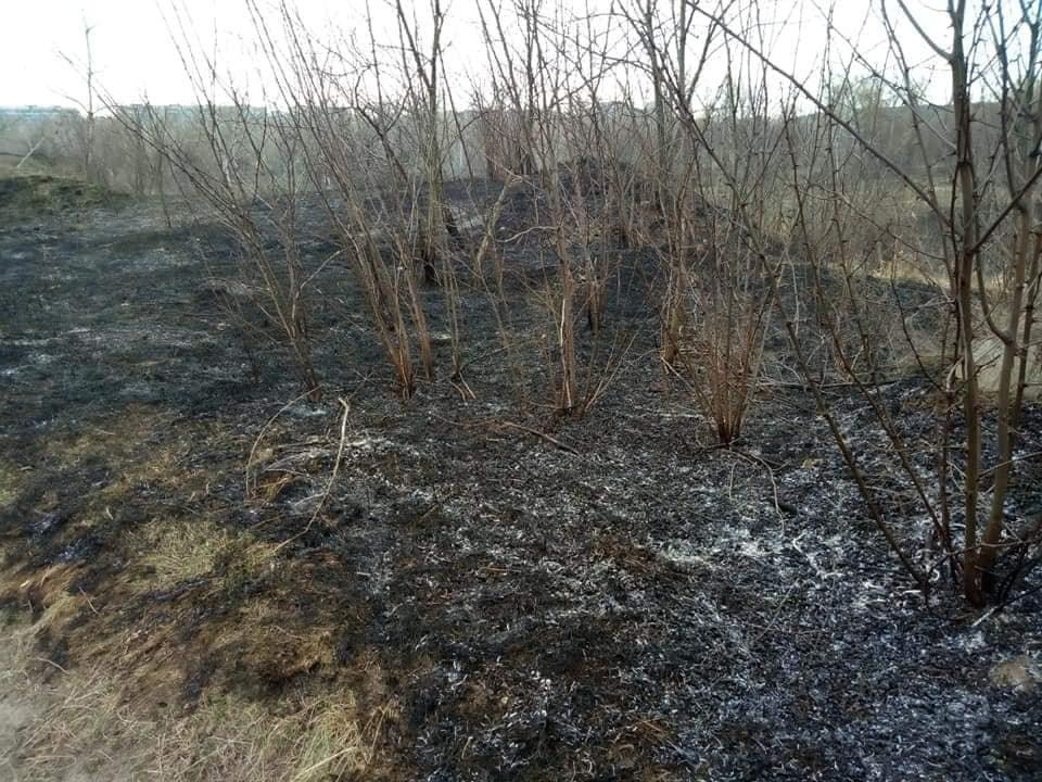 В Каменском горит экосистема, фото-4