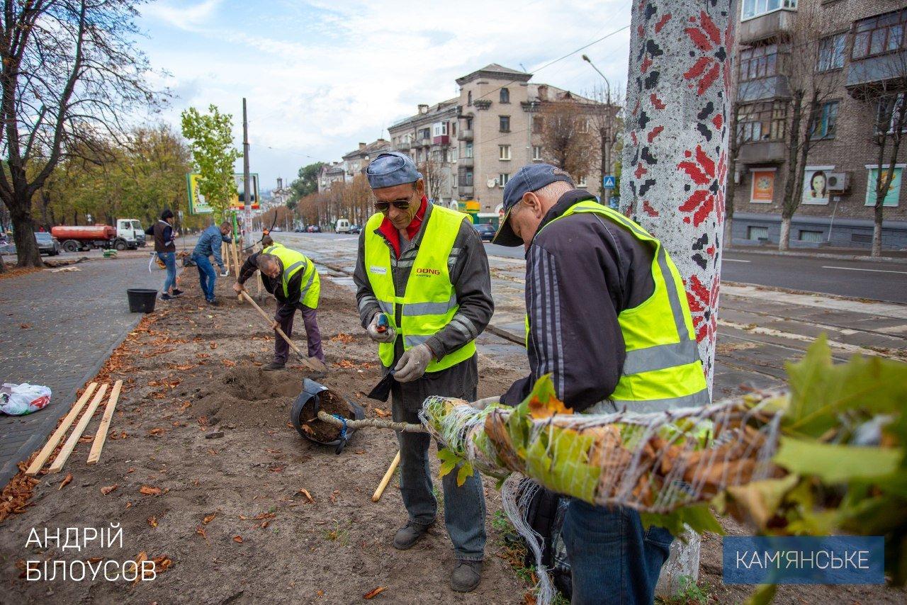 В Каменском по проспекту Свободы высаживают молодые деревья, фото-1