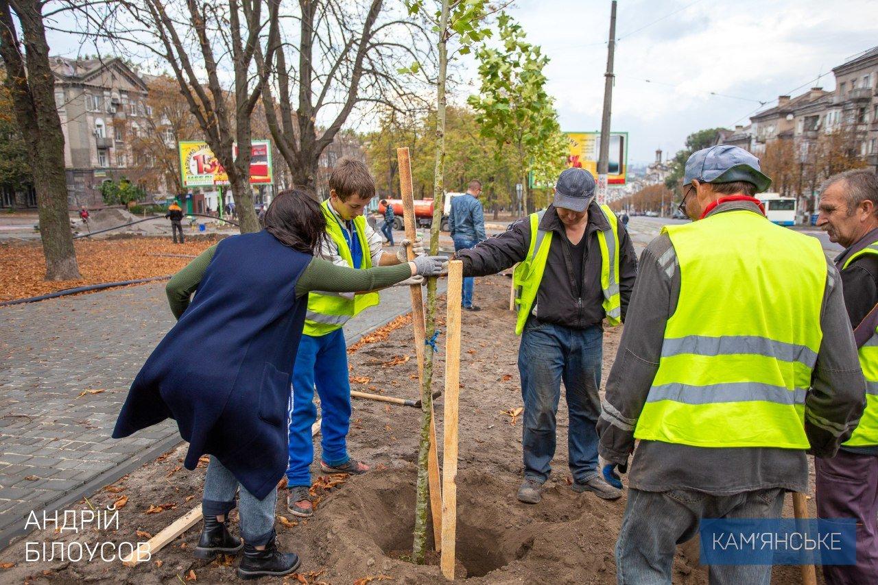 В Каменском по проспекту Свободы высаживают молодые деревья, фото-2