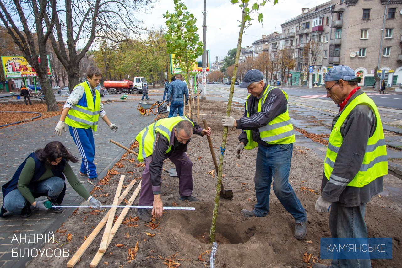 В Каменском по проспекту Свободы высаживают молодые деревья, фото-3