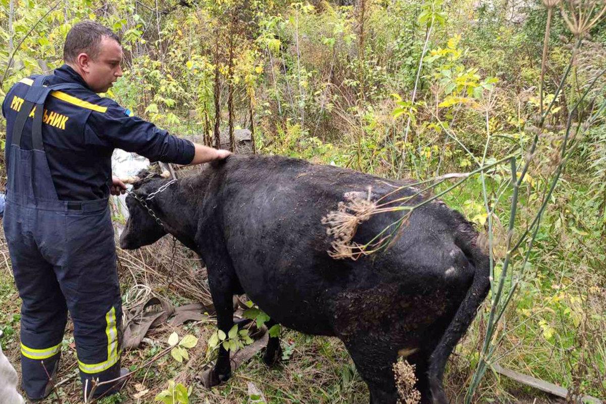 В Каменском спасали корову, фото-1