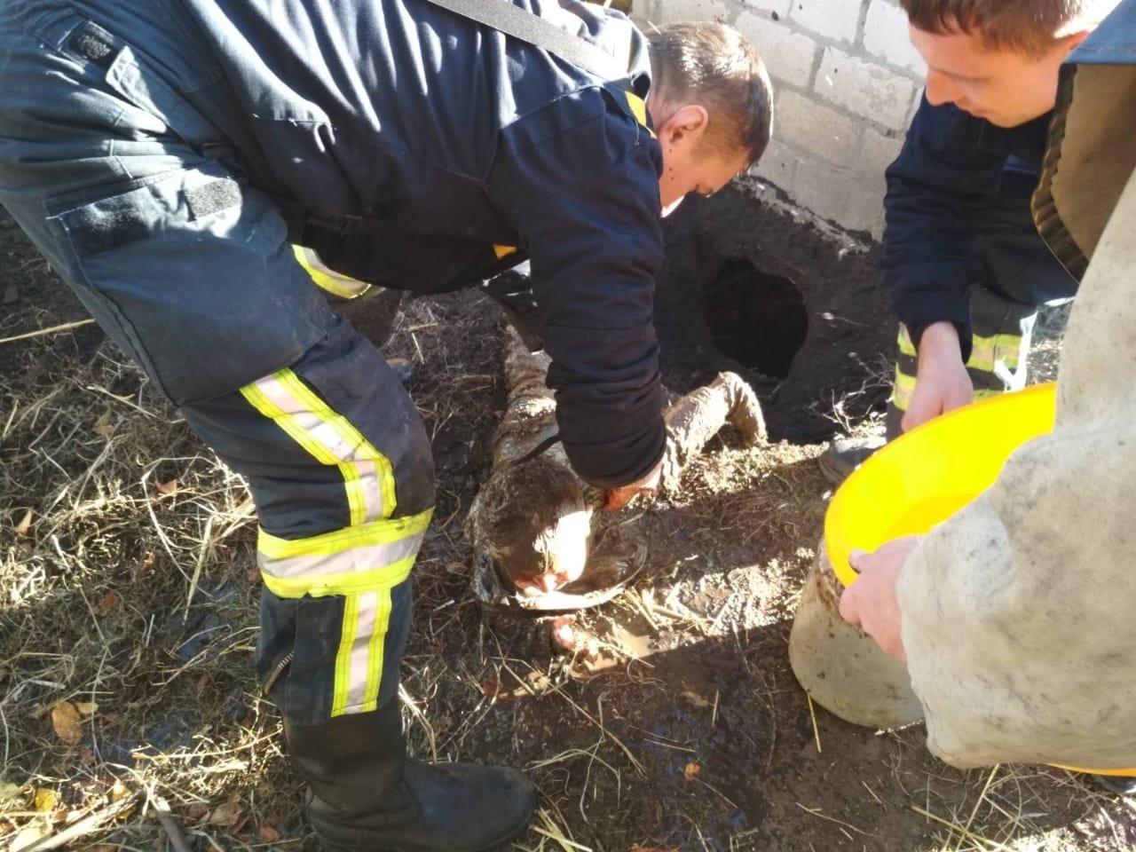 Под Каменским малыш упал в уличный туалет, фото-1