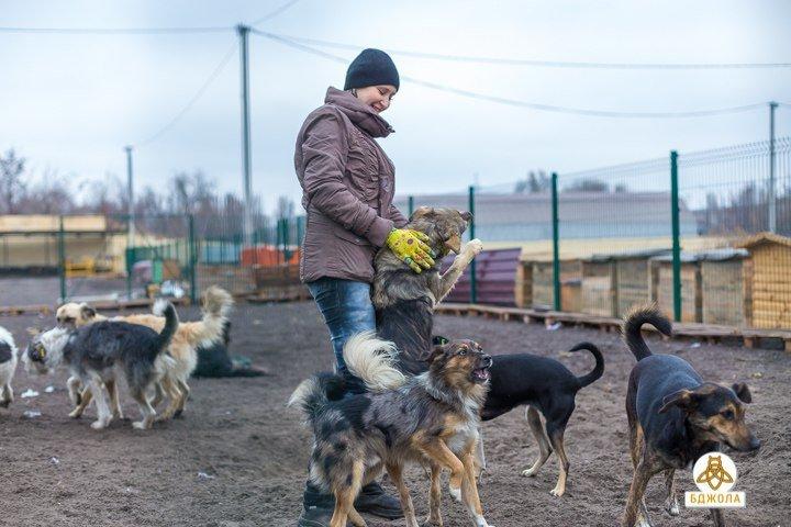 Активісти ГО «Бджола» допомогли притулку для тварин, фото-1