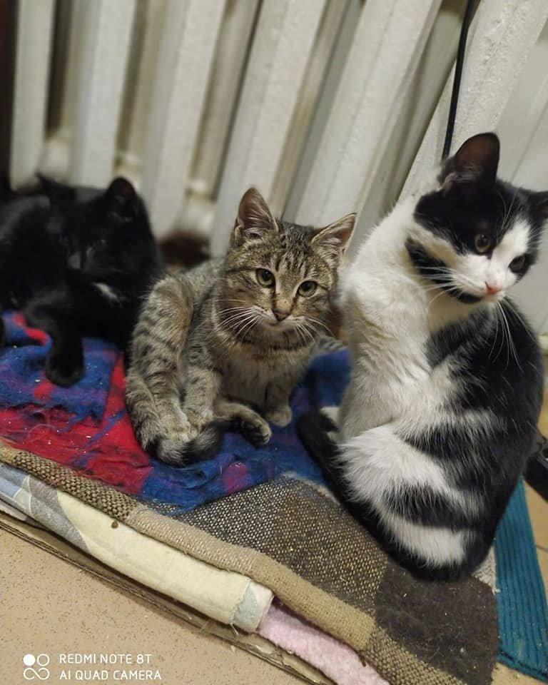 Какие животные в Каменском ищут дом, фото-3