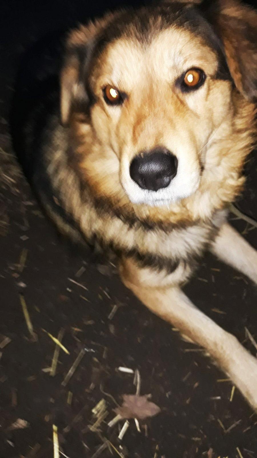 Какие животные в Каменском ищут дом, фото-7