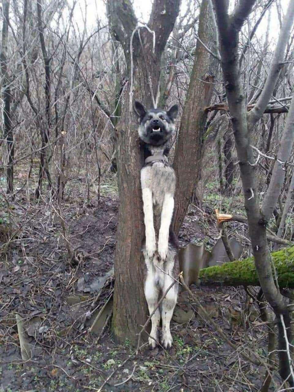 В Каменском повесили собаку