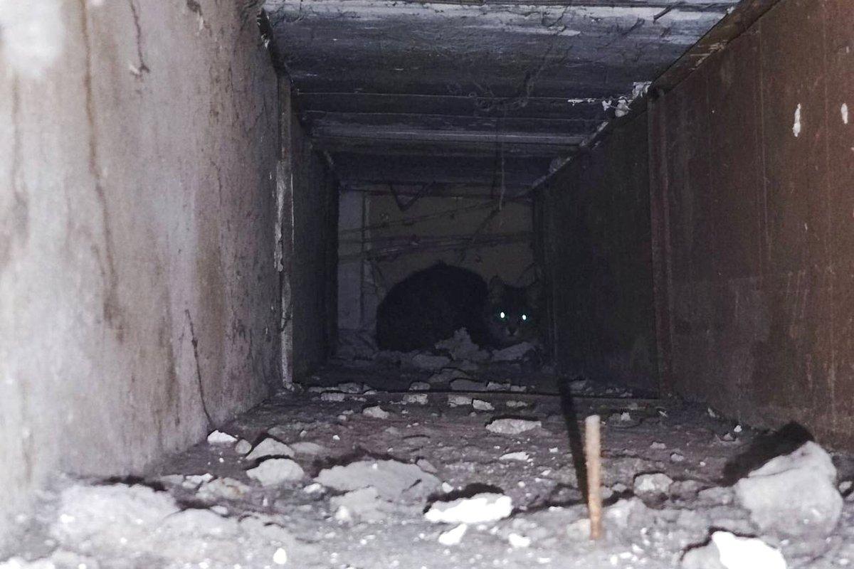 В Каменском спасли кота, фото-1